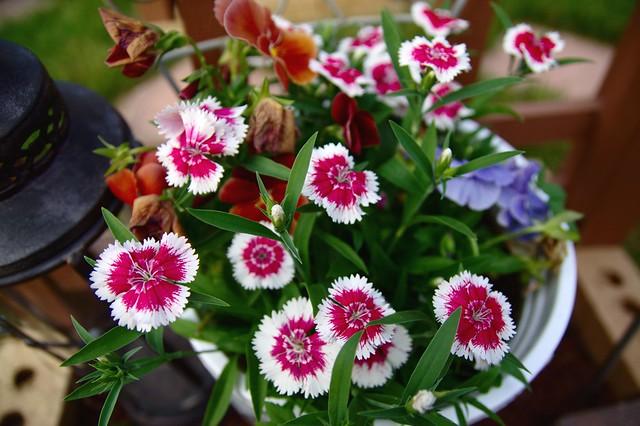 FlowersColor2