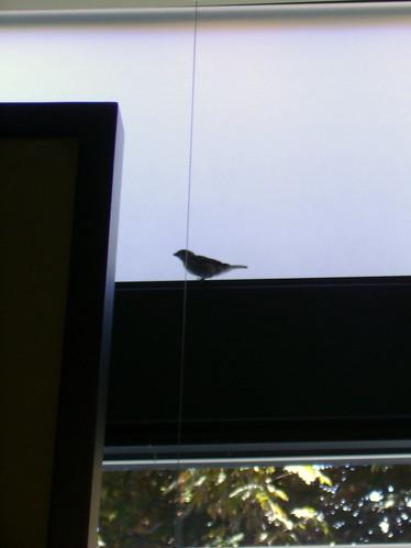 Birdie came back