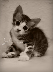 Hello Kitty !!  ..  2 pic (ABOORY ) Tags: cat nikon kitty نيكون kittenmagazine قطوه