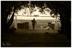 tenemos trabajo amigo (Kuiko) Tags: dog outdoors sony hunting coto campo alpha pampa 550 caceria perdices