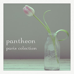 pantheon - [Explored] (picky & fussy) Tags: flower photoshop one action single tulip 2010 woodtable postprocessing pinktulip milkjar photoshopactions pariscollection curledleaf pickyphoto pickyphotoactions