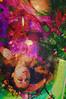 Starlight Goodbye (Léa-Valérie Létourneau) Tags: flowers green nature water colors fashion fleurs garden star rainbow colorful eau sad secret magic jardin vert triste mode couleur espace multicolor calme ophelia magie univers