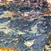Rock365 : 14 06 2010 : Blastomylonite Schist
