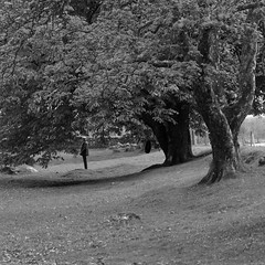 Old Inverlochy Castle (itmpa) Tags: trees tree slr castle monument silhouette canon square scotland crop cropped canopy historicscotland inverlochy hs 30d scheduledancientmonument canon30d ahss inverlochycastle visitorattraction oldinverlochycastle tomparnell architecturalheritagesocietyofscotland itmpa guardianshipmonument archhist