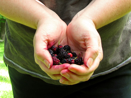 Got my hands on some mulberries