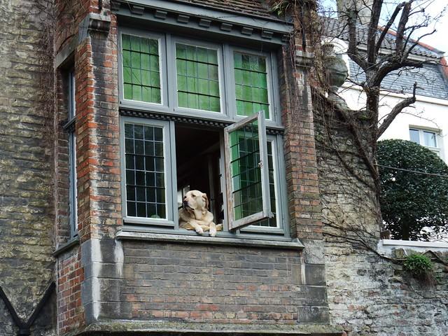 Bruges Dog