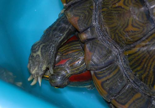 o187 - Turtle Hide