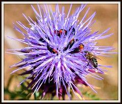 Crowdy (DannyGabay) Tags: flowers bees insects beatles colourful pollen crowdy pollinating fotocompetitionbronze mygearandmepremium