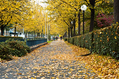 October has arrived (MeckiMac) Tags: leica autumn green colors yellow delete10 delete9 delete5 delete2 delete6 delete7 fallcolors streetphotography save3 delete8 delete3 delete delete4 save save2 m8 leafs deletedbydeletemeuncensored
