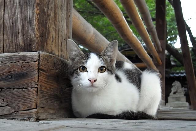 Today's Cat@2010-10-14