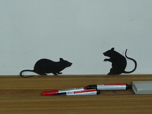 Halloween rats 1