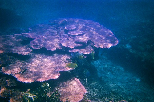 Underwater near Tioman