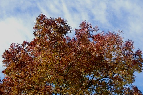 Herfstkleuren / Colours of autumn