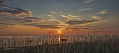 Sunset at the Seaside (Jyrki Liikanen) Tags: sunset sunbeams sunshine sunsetattheseashore reeds seashore seascape beach sand sandy naturephotography nature love happiness atmospheric beautiful beautiness summer summerlandscape summernight july gulfofbothnia finland