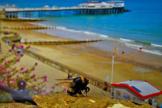 Oh I do like to Bee beside the seaside :-)