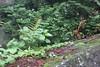 IMG_2754 (normafincher) Tags: japan nikko nikkonationalpark