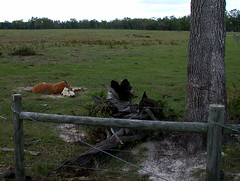 BONELUST - Dead Cow 4