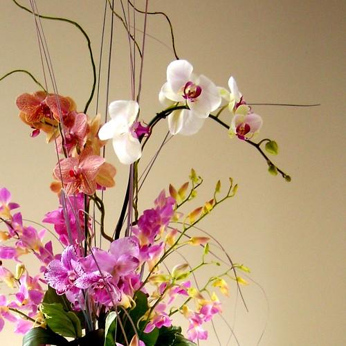 Floristry #1