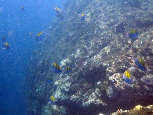costa rica underwater 011