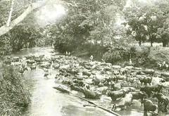 provincia 046 (flegisto) Tags: 1922 miralles albumdemiralles