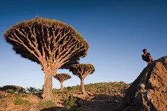 Stock image of Socotra Island - Yemen (Michele F.) Tags: trip travel vacation people holiday man men travelling tourism nature water look stone landscape island spiky kid sitting child plateau scenic middleeast eerie tourist palm arabic cobblestone oasis arab thinking vegetation spike remote yemen arabian date endemic wadi middleeastern turism yemeni arabiansea youngboy turist socotra islamiccountry offthebeatentrack gulfofaden arabianpeninsula dragonbloodtree worldlocation suqutra worlddestination dracaenacinnabari homil sucotra suqotra