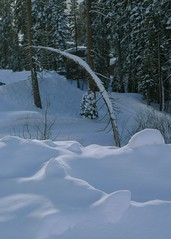 Bent Tree (WissPix) Tags: california snow ski sugarbowl