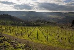 2010-01-18 - Colline del Chianti nei pressi di Panzano