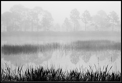 The Dawn of Another Day (Kevin B Photo) Tags: morning trees light blackandwhite bw usa white lake black reflection tree nature wet water beautiful beauty grass silhouette horizontal fog pine america reflections landscape dawn day exterior unitedstates graphic florida south gray foggy scenic calm southern layers daytime grasses fl freshwater kevinbarry wowiekazowie