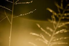 _IGP1076 (orang_asli) Tags: africa nature grass sunrise southafrica nationalpark champs fields herbe flore lieux leverdesoleil afrique période aficionados hluhluwe bushveld naturel afriquedusud savane parcnational géographie monocotylédone pžriode gžographie monocotylždone