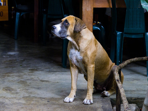 Dog at Los Amigos Hostel