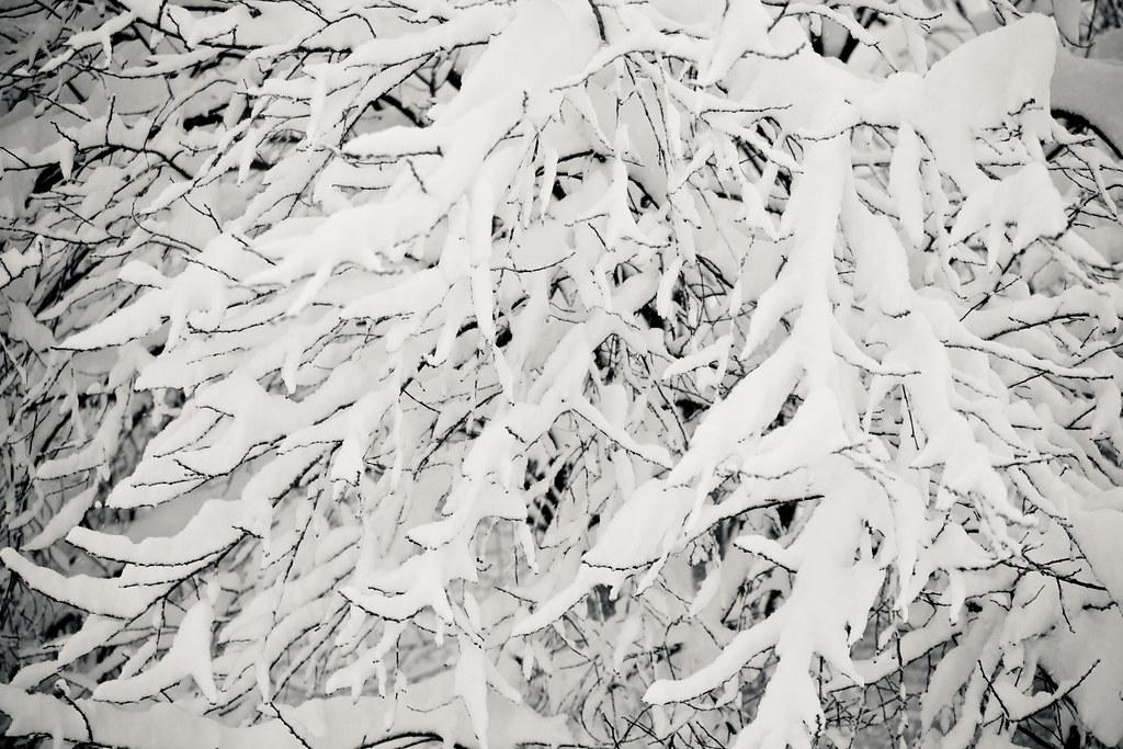 Snowmageddon '10
