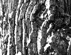 bark and snow