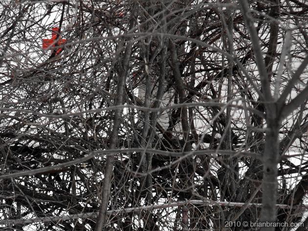 P1080271_red_cross