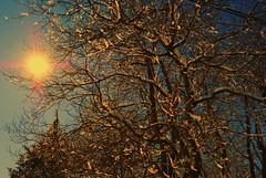 (itsamazzinggrace) Tags: blue trees winter sun snow cold melting nikond3000