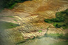 The Patern of Nature (Sayid Budhi) Tags: nature fog fields hillside sawah muara slopes laketoba balige tourismdestination northsumatra sumaterautara tapanuliutara hutaginjang paddifields visitlaketoba2010 kunjunganwisata