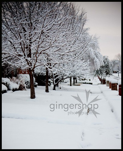 more snow 20102