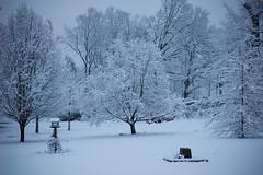 Snow-4837