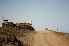 soli tra le pecore (F r A U) Tags: canarie villaggio pecora