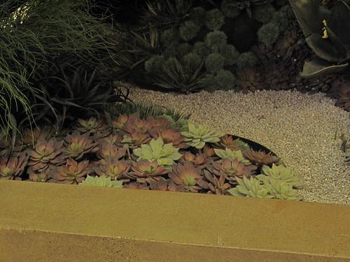 Fake succulent garden