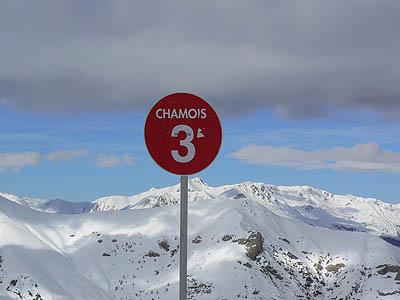 chamois.jpg