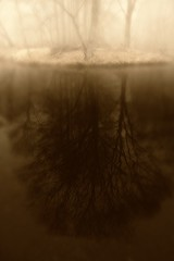 Misty reflection (waltersoluh) Tags: mist reflection tree nature water fog landscape legacy fpg fineartphotos mywinners platinumphoto theunforgettablepictures colorsofthesoul dragondaggerphoto artistictreasurechest redmatrix magicunicornverybest adriënnesmagicalmoments