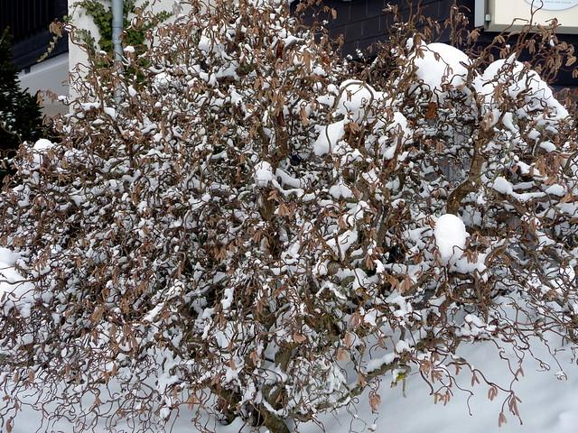 Snow fractals