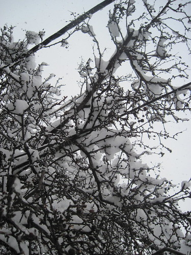 Thick Snow on Branches