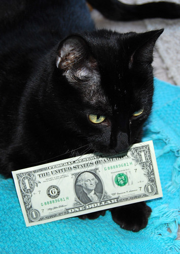 Through Cash Like Kibble