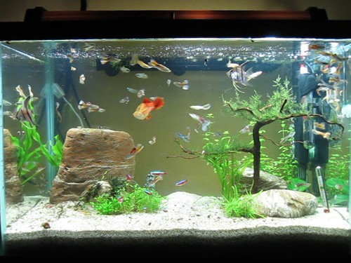 Tips for new aquarium owners my aquarium club for How many gallons is my fish tank