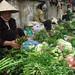 Pham Ha Photo 10