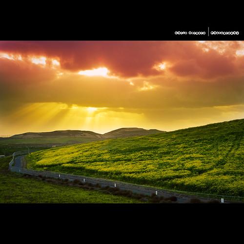 Sun Rays