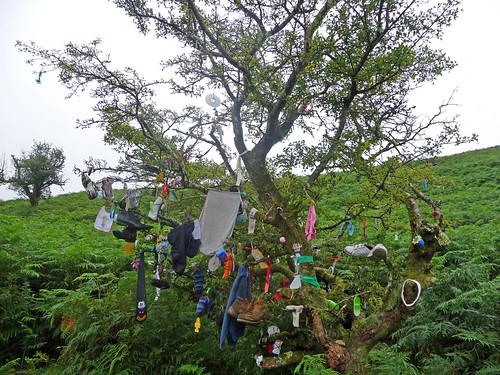 Clootie Tree, Ireland