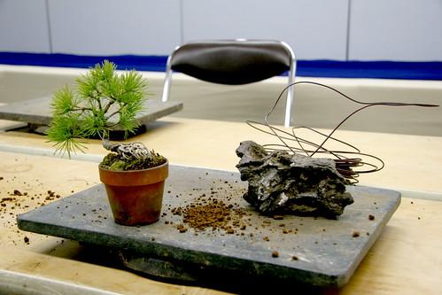Bonsai (石付き) - estado inicial