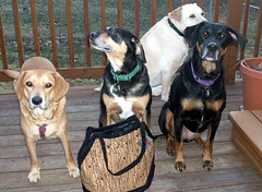 4Dogs_TBihnBag_31710b